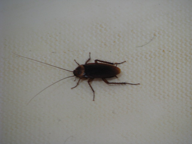 Pulling Stakes: Roach