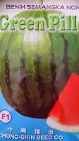 buah besar, daging merah, buah bulat, semangka non biji, semangka Green Pillow, Non Biji Green Pillow, Chung Shin Seed, Taiwan