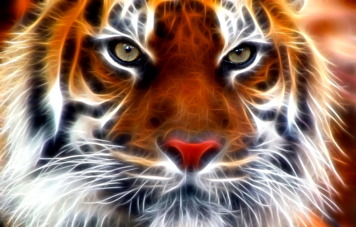 Free Tiger Face Hd Pc Wallpapers Download