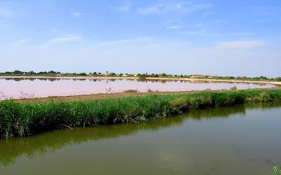 Salinas de la Camarga