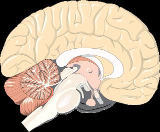 Efecto de la acupuntura en el deterioro cognitivo y el Alzheimer