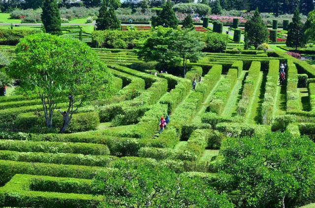 Labiri Nusantara Flower Garden