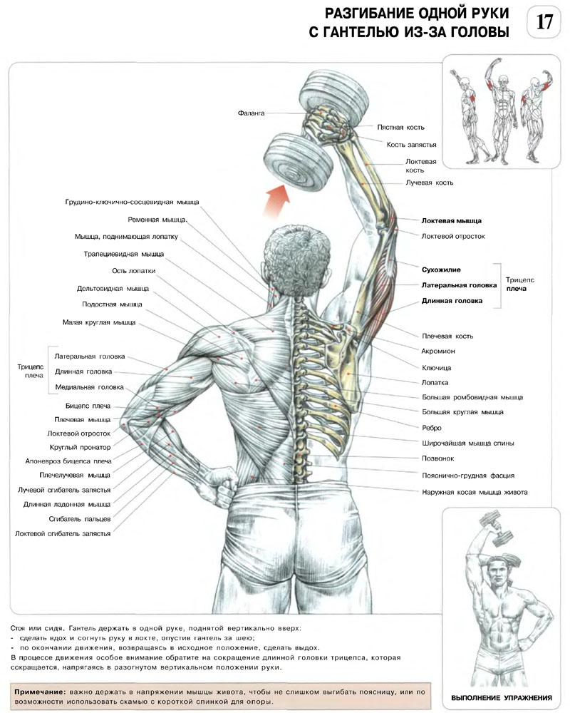 Tacia : упражнения с гантелями для мыщц рук