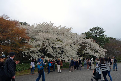 Honmaru Area of the East Gardens of Imperial Palace Tokyo