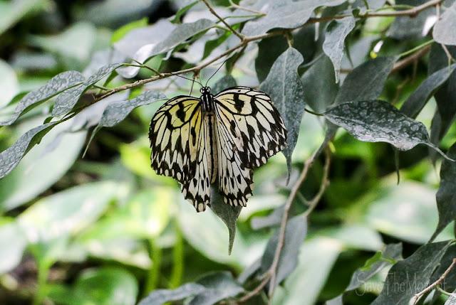 Schmetterlinge im Luisenpark
