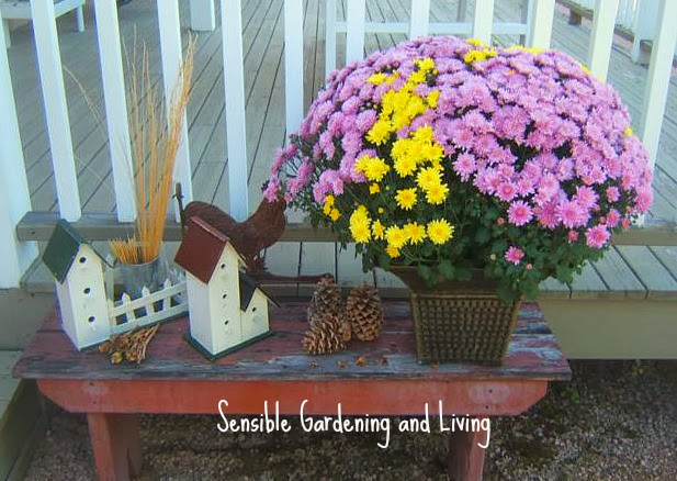 Speedy Fall Decor http://sensiblegardening.com/super-speedy-fall-decor/