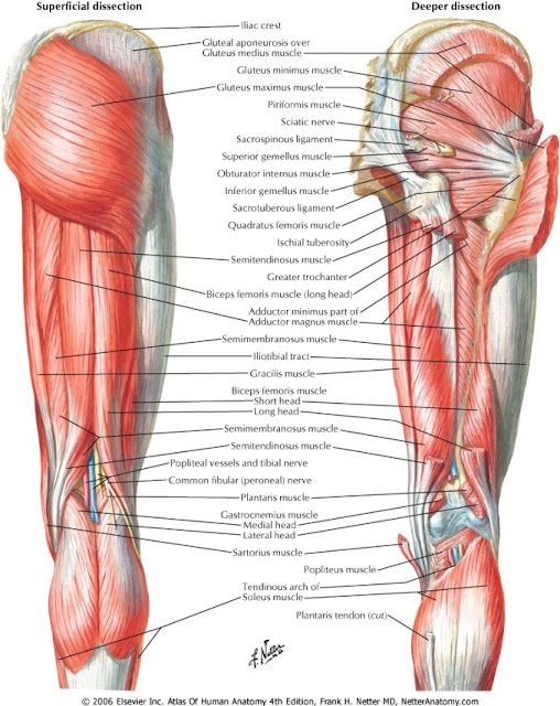 Strength is Never a Weakness: Hamstring Heaven!!