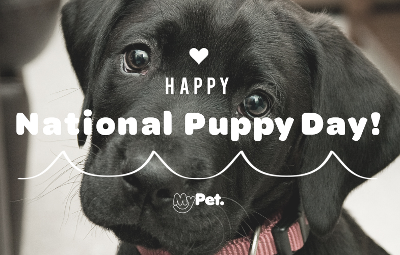National Puppy Day Facebook Images
