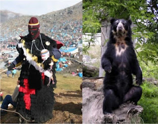 ukuku dancer and spectacled bear