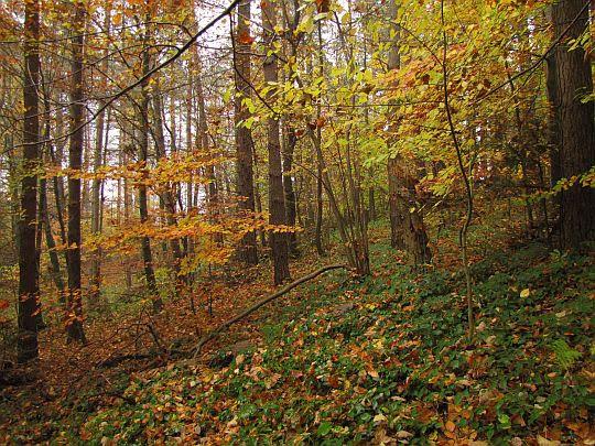 Las na Zaśpicie.