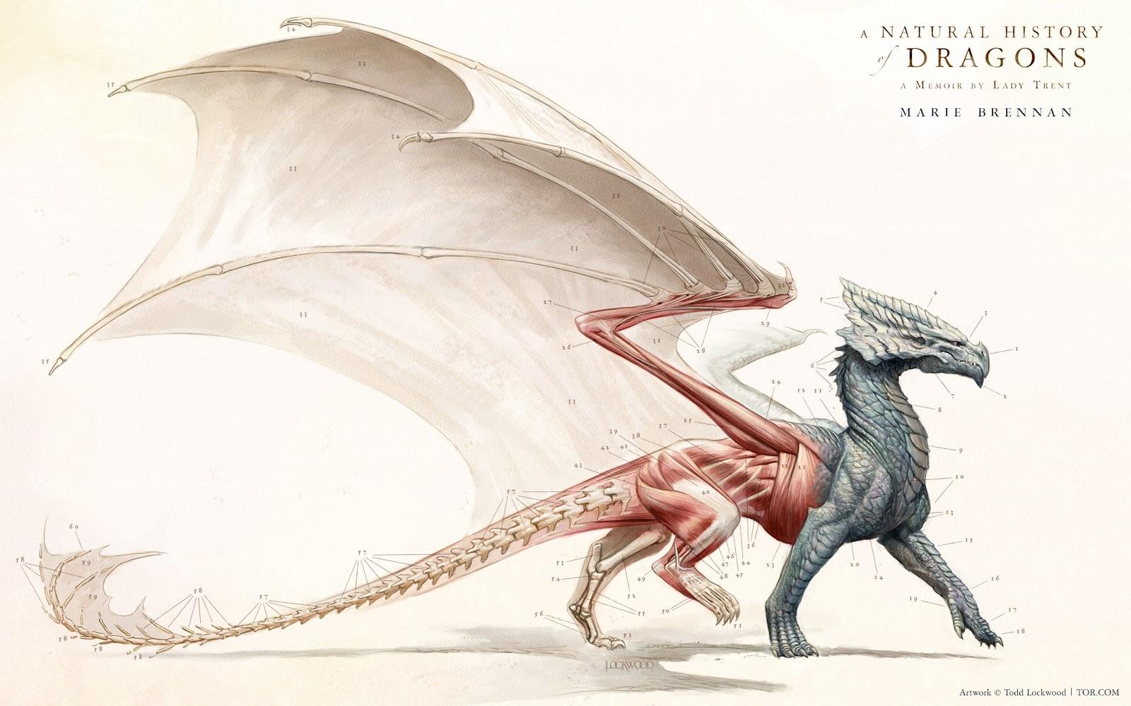 Dragon Anatomy on Bird Anatomy