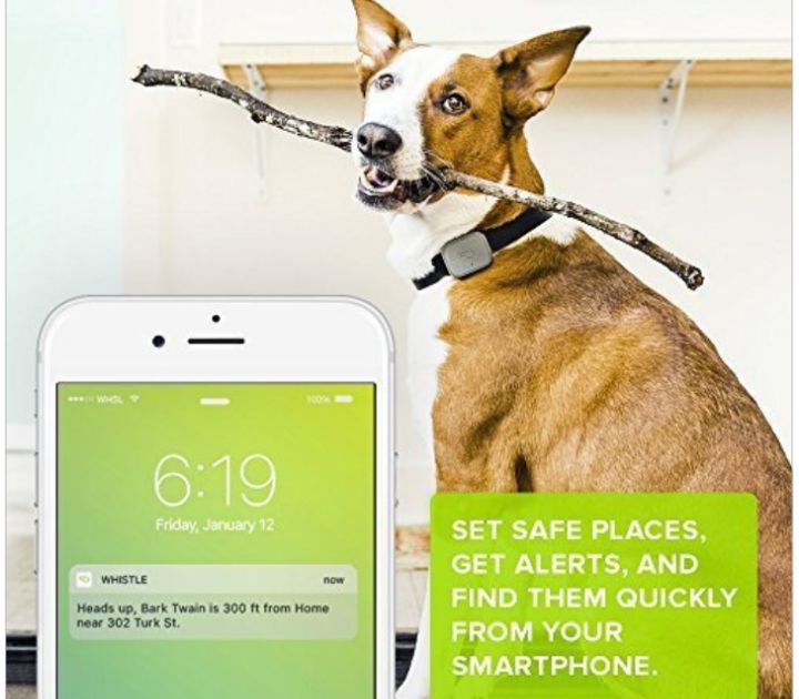 Whistle's Smart Activity Tracker for Pets
