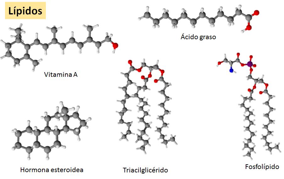 Bioquimica Lípidos Y Membranas