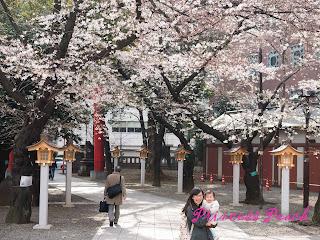 花園神社櫻花
