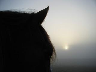 oeil cheval photo lever soleil