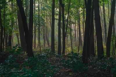 po deszczu fotografie las