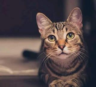 La misión de los gatos