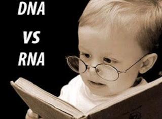 perbedaan rna dan dna dalam bentuk tabel,tahapan sintesis protein,perbedaan fungsi rna dan dna,perbedaan rna dan dna pdf,jelaskan perbedaan dna dan rna,sebutkan perbedaan antara dna dan rna,