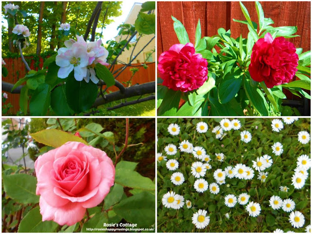 Being blessed by our garden: We've been overwhelmed this year by beautiful blooms honeys and feel so grateful.