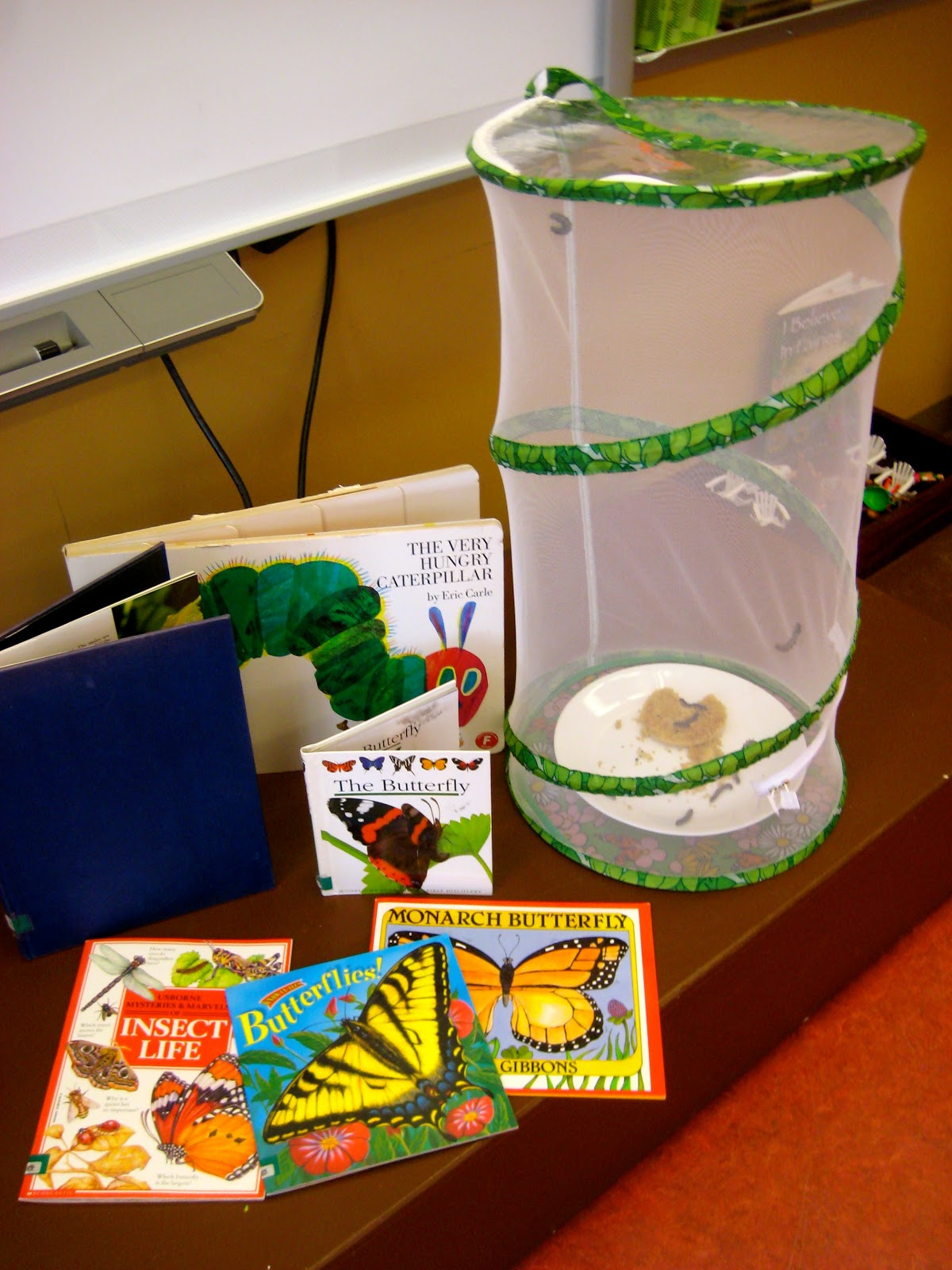 Ms Liebel S Classroom Mini Butterfly Book