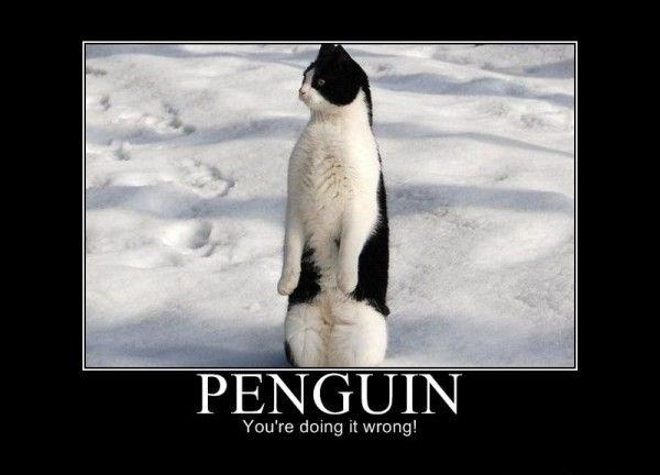 cat penguin