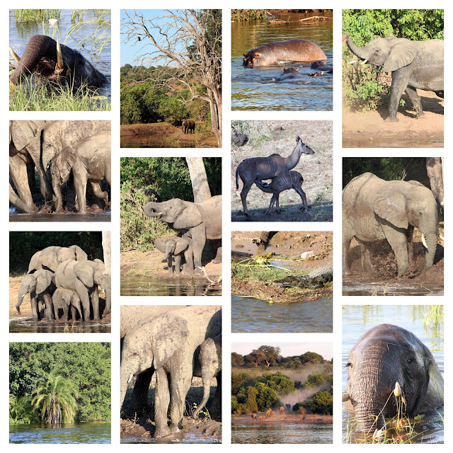 Eagles, hippos, crocodiles, elephants, kudu on the Chobe River in the Chobe National Park in Botswana
