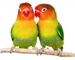 Cara Sukses Ternak Lovebird Koloni Omset Jutaan Rupiah