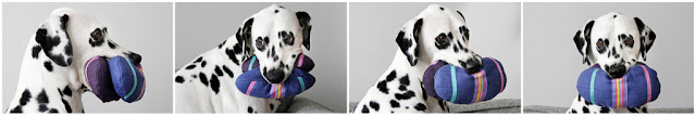 Dalmatian dog playing with homemade Easter egg dog toys with brightly coloured ribbons