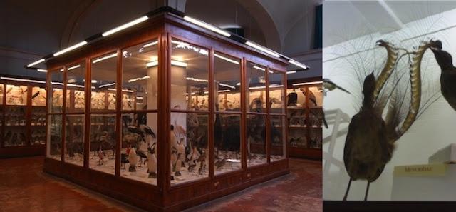 Museo La Specola Firenze