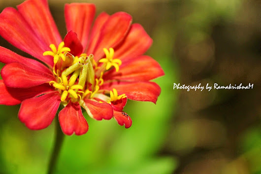 Ramakrishna's Photography: Try for Wallpapers
