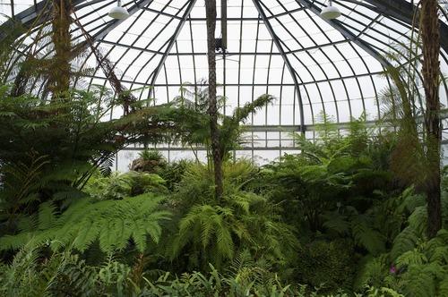 Victorian Greenhouse Interior