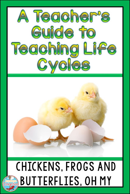 Explore ideas for teaching your students about life cycles of chickens, butterflies, frogs, and more.