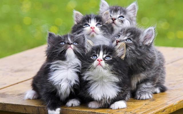 5 Manfaat Memelihara Kucing yang Jarang Diketahui Orang