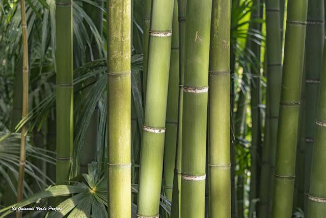 Bambús de la Bambouseraie en Cévennes, Francia por El Guisante Verde Project
