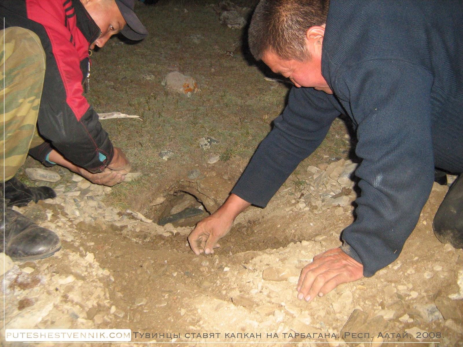 Тувинские охотники ставят капкан на тарбагана