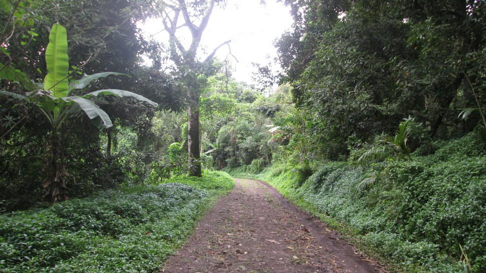 Parcours forestier du Raid des Vahine entre Teavaro et Temae