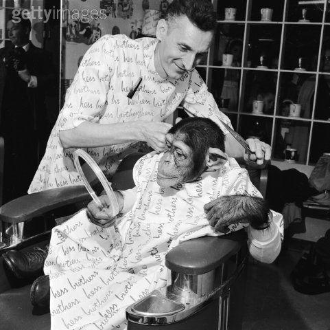 село обезьяна в парикмахерской картинки сожалению