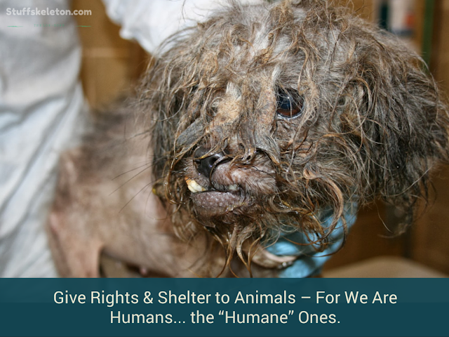 """Give-Rights-&-Shelter-to-Animals–For-We-Are-Humans-The-""""Humane""""-Ones"""