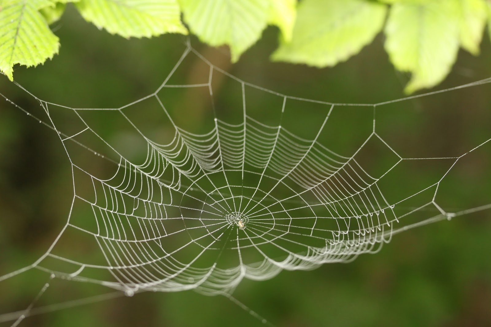 An amazing design of a cobweb.