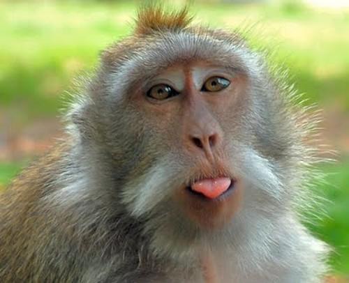 hilarious monkeys - photo #1