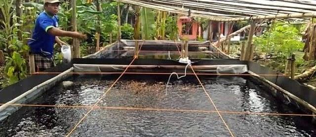 Cara Budidaya Ikan Tawes Secara Alami dan Buatan Kolam Terpal