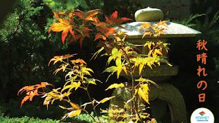 Un bonito día de otoño - JAPONES