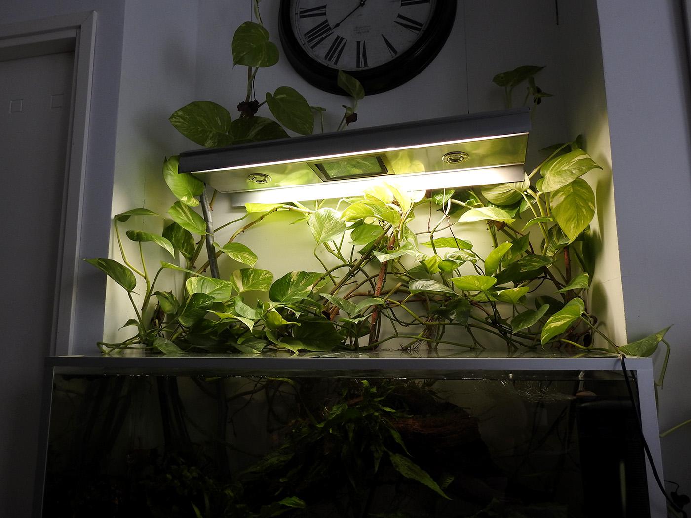 akvaario osana sisustusta