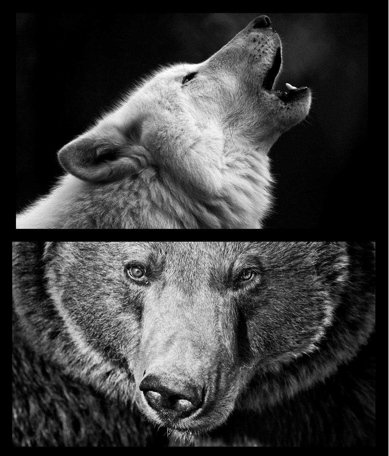 Tadellöser Und Wolf