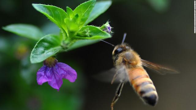 Μέχρι 30 Δεκεμβρίου η προθεσμία για δήλωση μελισσιών