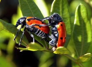 Aracnidos reproduccion asexual de las plantas