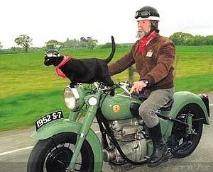 котка мотор маце мотоциклет растус