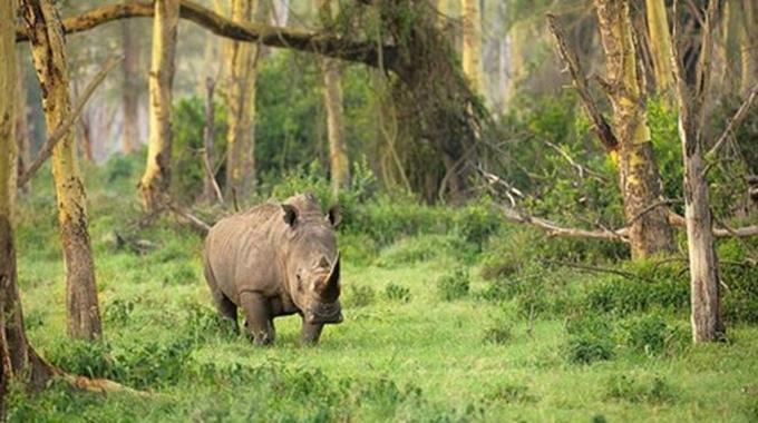 Taman Nasional Ujung Kulon salah satu 7 Taman Wisata Terbaik Di Indonesia Yang Bisa Anda Kunjungi Bersama Keluarga.
