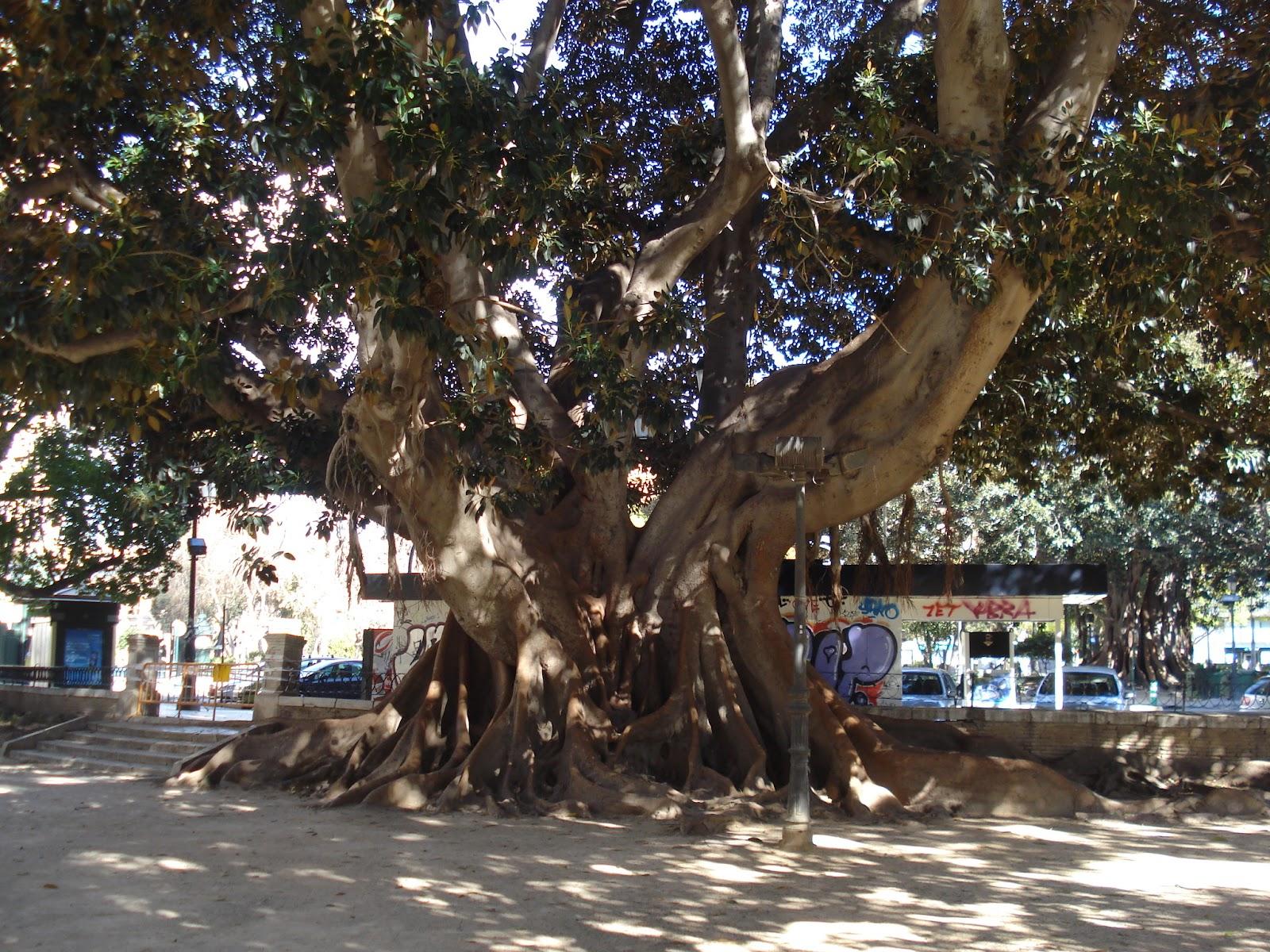 Not Hemingway's Spain: Valencia, Spain's Third Largest