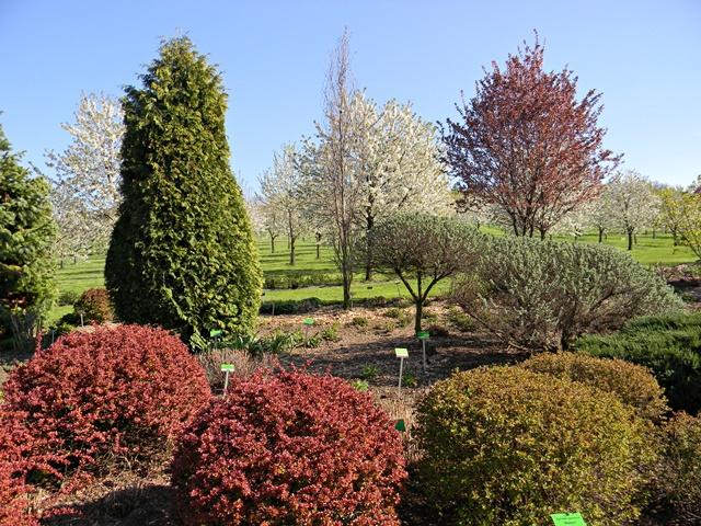 W Wojsławicach są ciekawe kompozycje roślin o barwnych liściach.